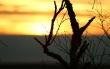 Auringon_nousu_oksa.jpg